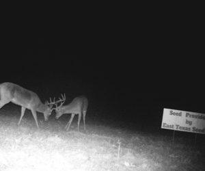 Deer in field at night